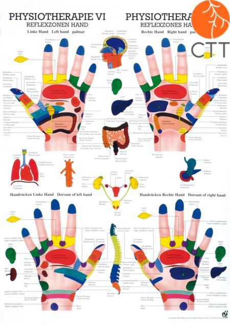 Poster Physiotherapie VI