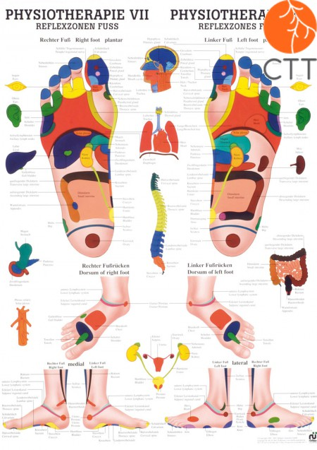 Poster Physiotherapie VII