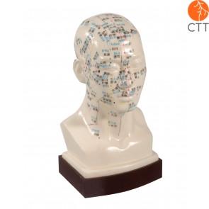 Professionelles Akupunktur-Kopfmodell, Hartplastik 21cm