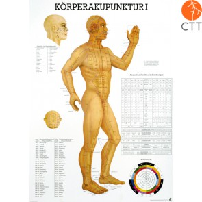 Lehrtafel Körperakupunktur I