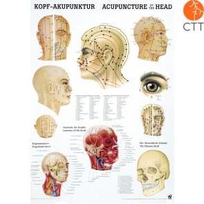 Poster Kopfakupunktur Kopf