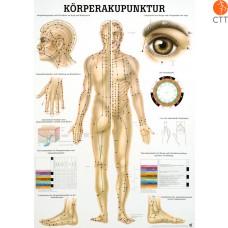 Poster Körperakupunktur Körper
